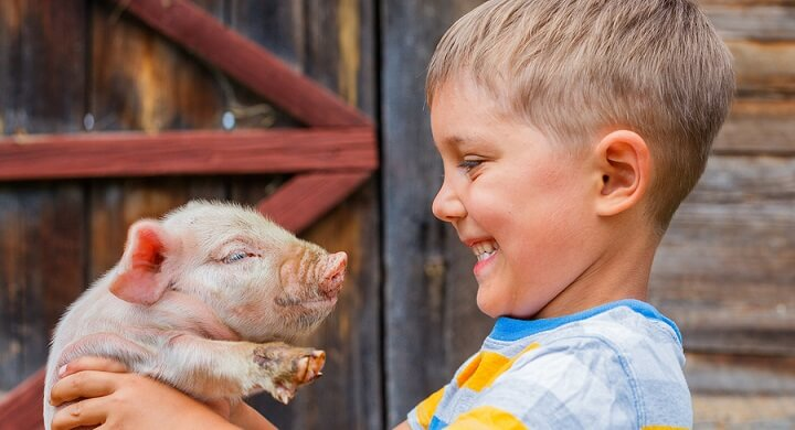 Boy-with-piglet2